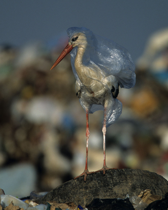 01 Inquinamento plastica National Geographic