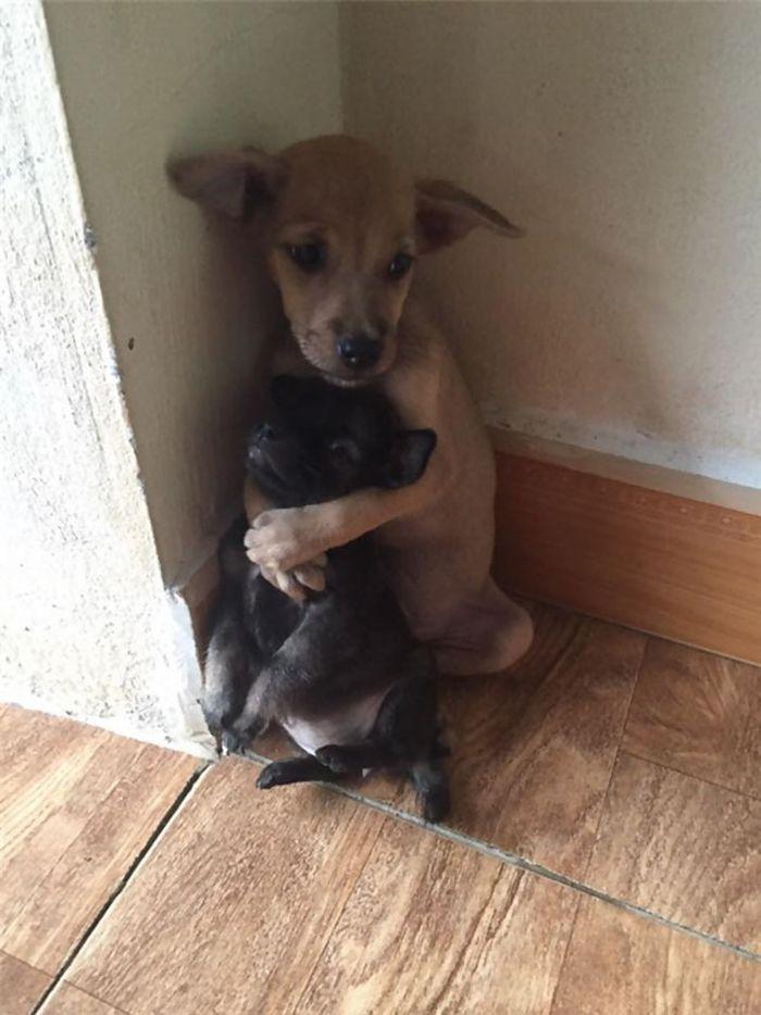 01 Le tenere immagini di cuccioli abbandonati che si abbracciano l'un l'altro
