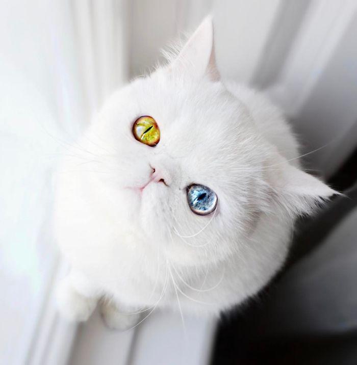 01 Pam Pam un gattino dallo sguardo davvero speciale