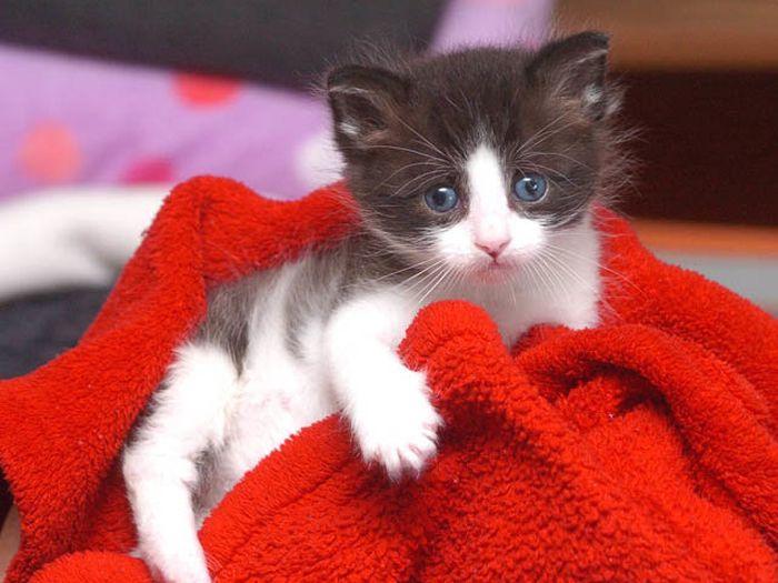 01 gattino nella posta