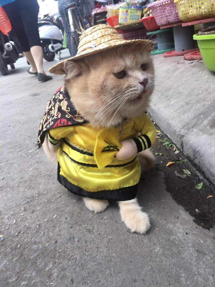 01 gatto travestito