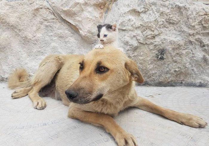 02 Da Aleppo una storia commovente tra un gattino e un cane