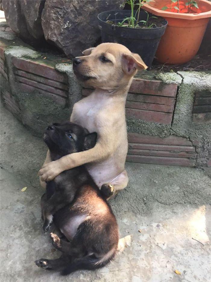 Cani abbandonati abbracciati