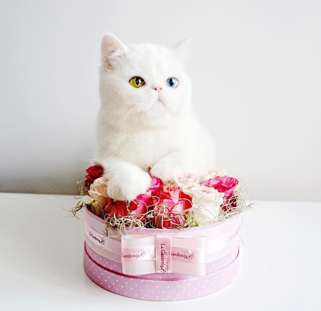 02 Pam Pam un gattino dallo sguardo davvero speciale