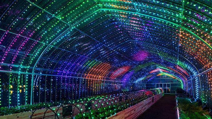 03 A Tokyo creata una serra per esperienze multisensoriali