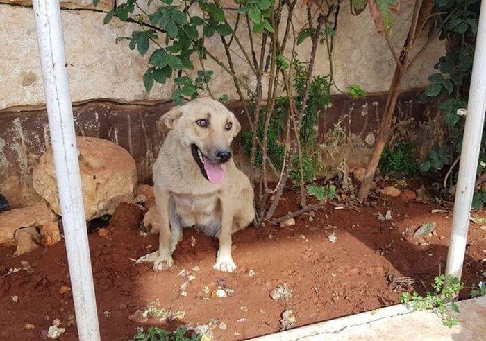 03 Da Aleppo una storia commovente tra un gattino e un cane