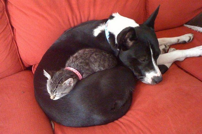 03 Gatti che dormono sui cani