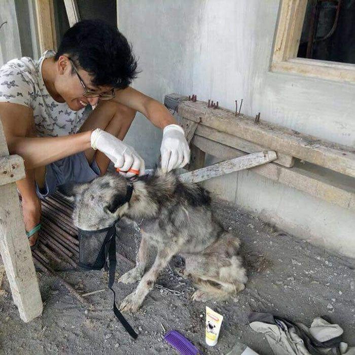 03 Husky abbandonato e poi nutrito e guarito