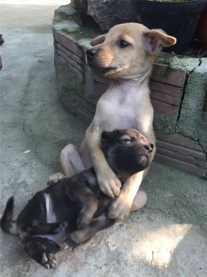 Cani abbandonati che si abbracciano
