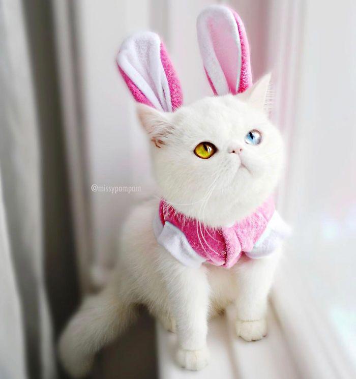 03 Pam Pam un gattino dallo sguardo davvero speciale