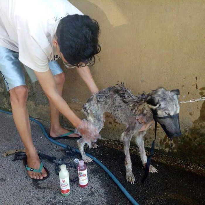 04 Husky abbandonato e poi nutrito e guarito