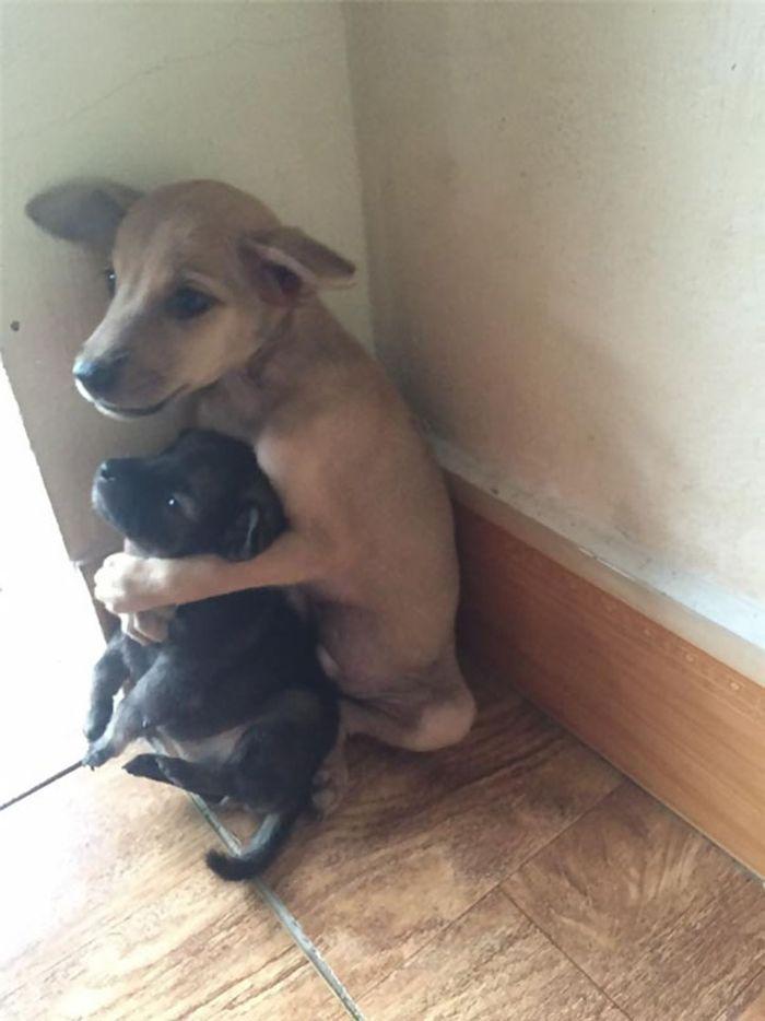 Cuccioli di cani impauriti