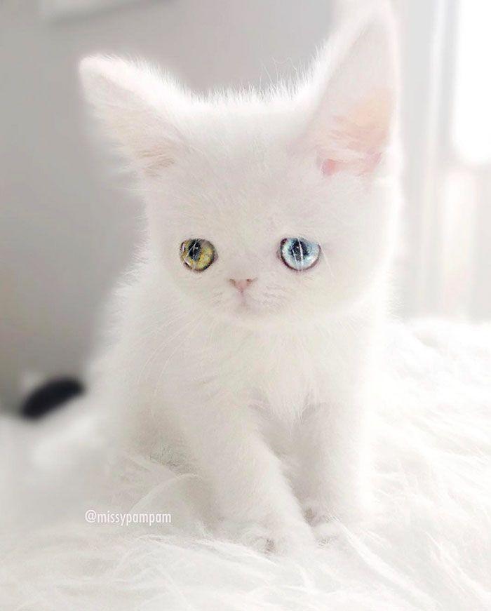 04 Pam Pam un gattino dallo sguardo davvero speciale