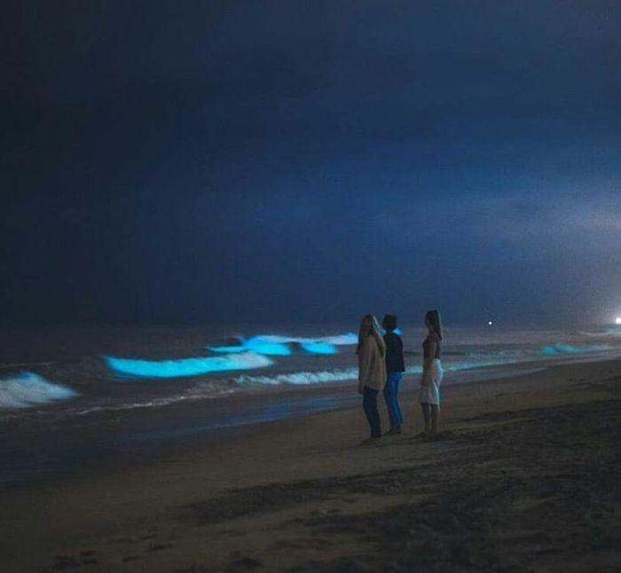 04 spiagge di San Diego fluorescenti