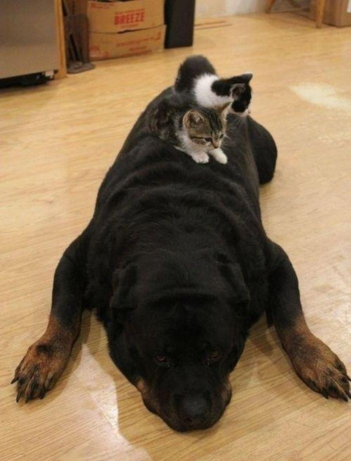 05 Gatti che dormono sui cani