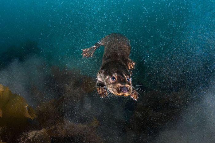 05 Gli scatti più belli dell' Underwater Photographer of the Year 2018