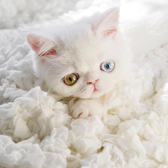 05 Pam Pam un gattino dallo sguardo davvero speciale