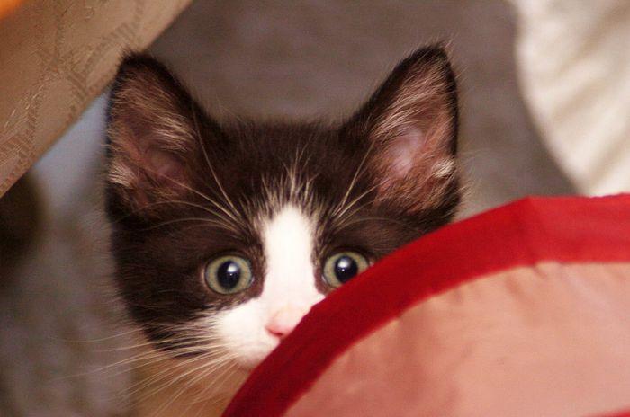 05 gattino nella posta