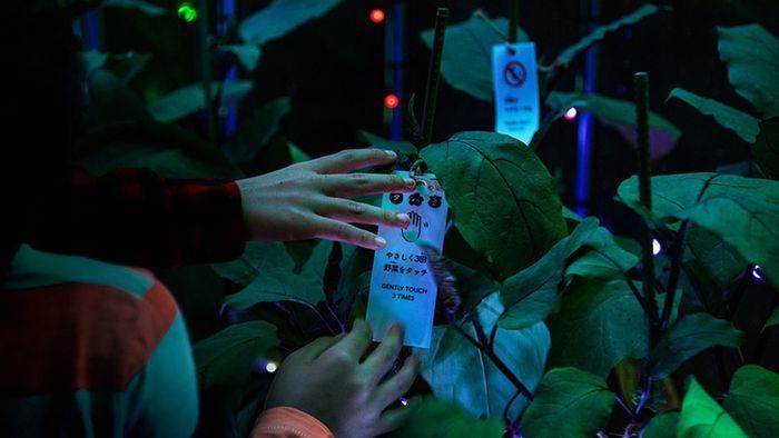 06 A Tokyo creata una serra per esperienze multisensoriali