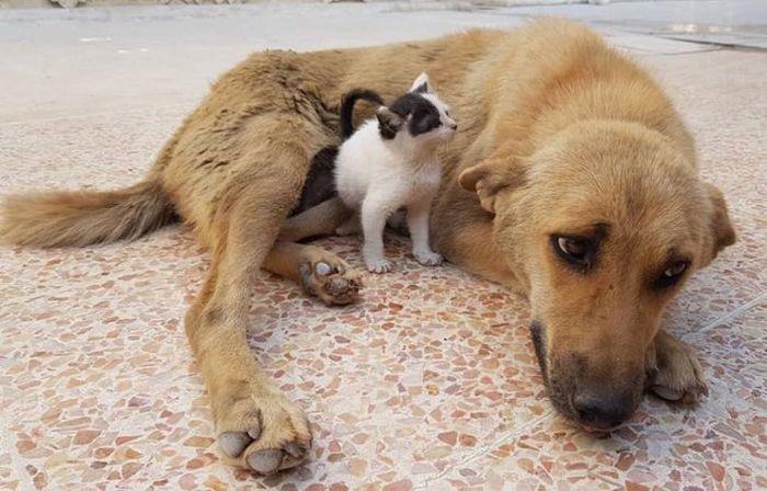 06 Da Aleppo una storia commovente tra un gattino e un cane