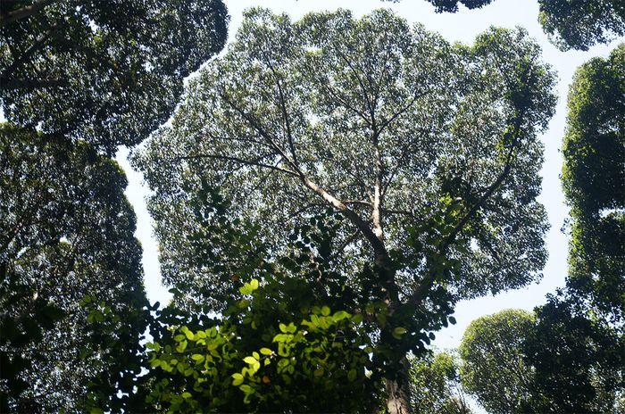 06 La timidezza botanica