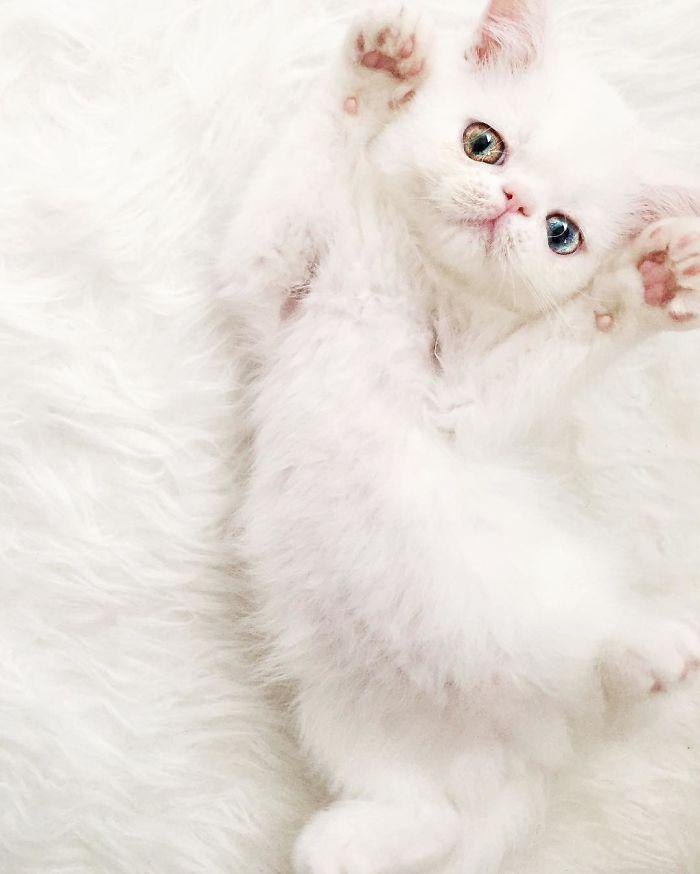 06 Pam Pam un gattino dallo sguardo davvero speciale