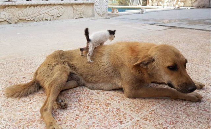 07 Da Aleppo una storia commovente tra un gattino e un cane