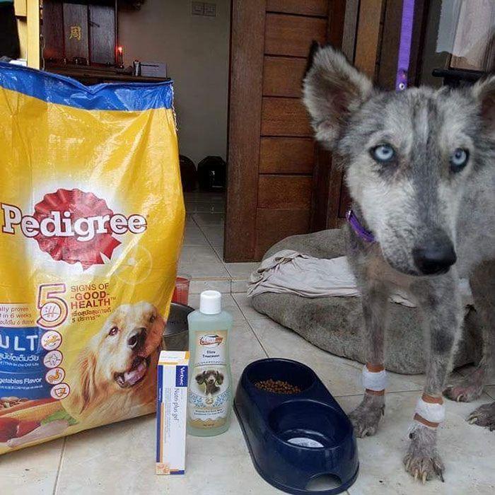 07 Husky abbandonato e poi nutrito e guarito