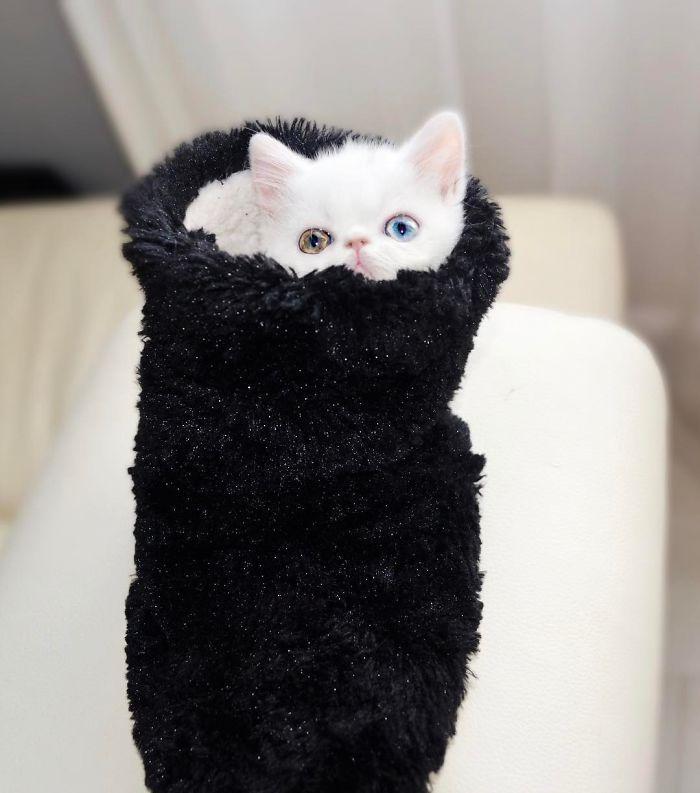 07 Pam Pam un gattino dallo sguardo davvero speciale