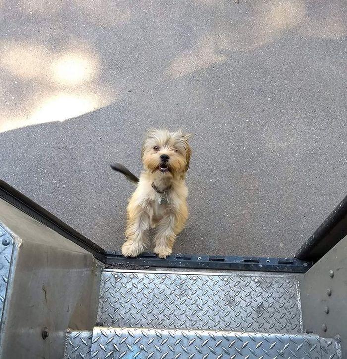07 operazione UPS dog