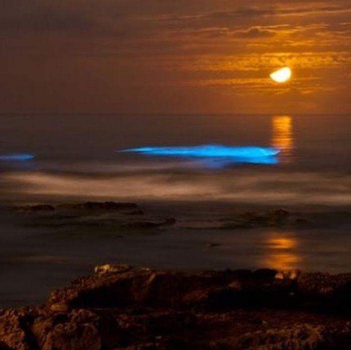 07 spiagge di San Diego fluorescenti