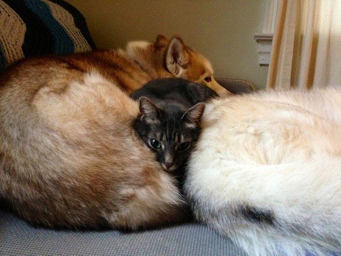 08 Gatti che dormono sui cani