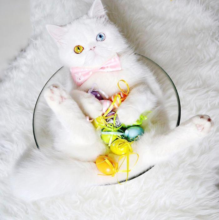 08 Pam Pam un gattino dallo sguardo davvero speciale