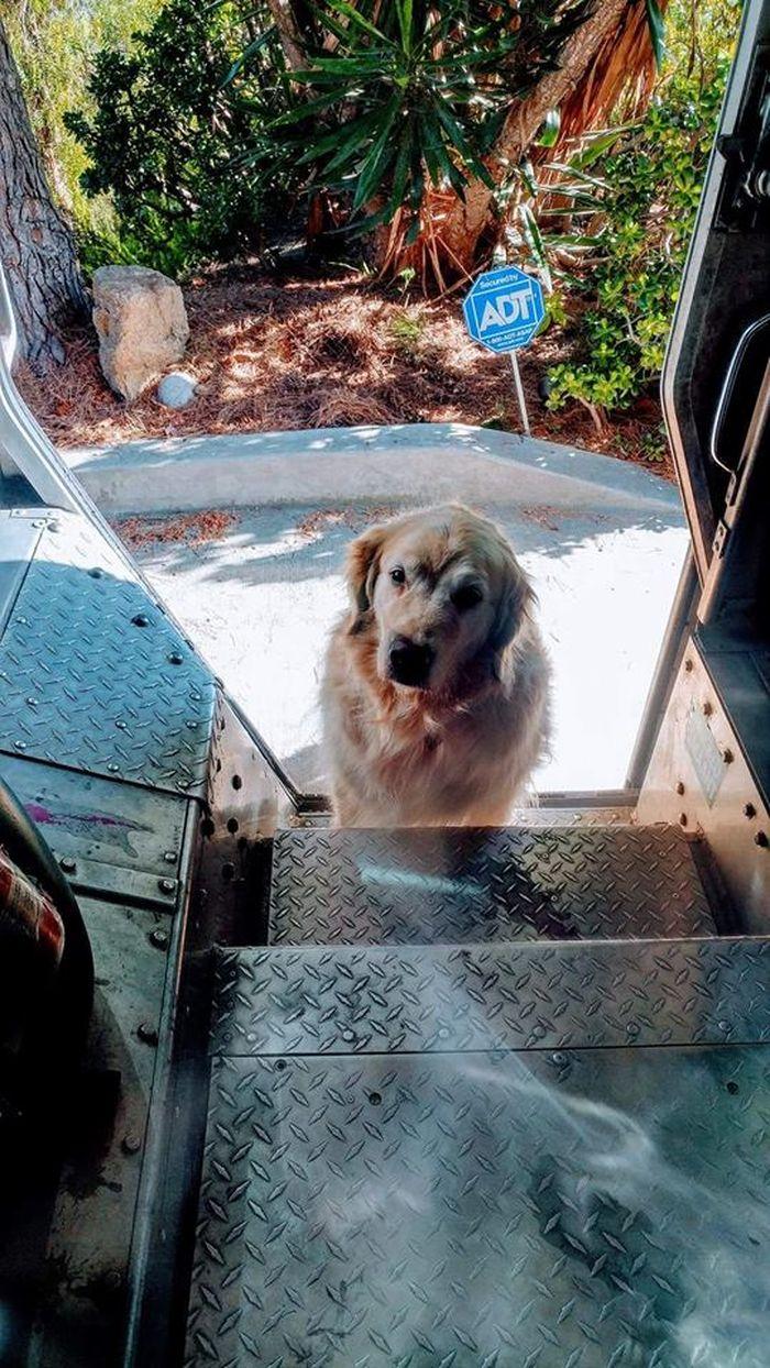 08 operazione UPS dog