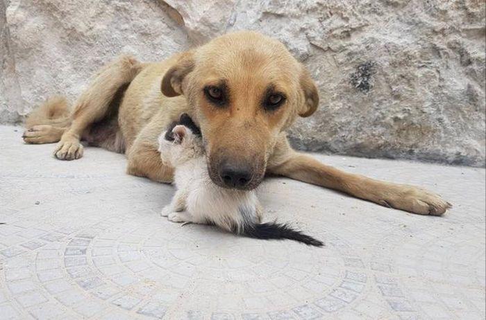 09 Da Aleppo una storia commovente tra un gattino e un cane