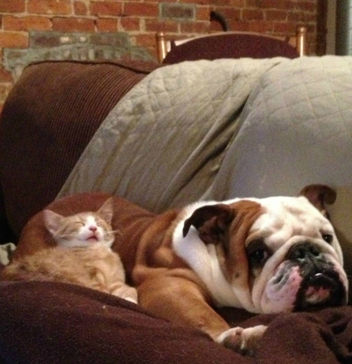 09 Gatti che dormono sui cani