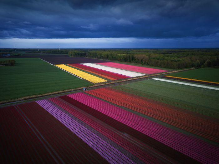 09 I tulipani in Olanda visti da un grande fotografo