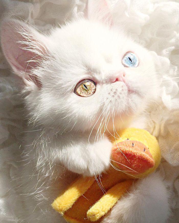 09 Pam Pam un gattino dallo sguardo davvero speciale