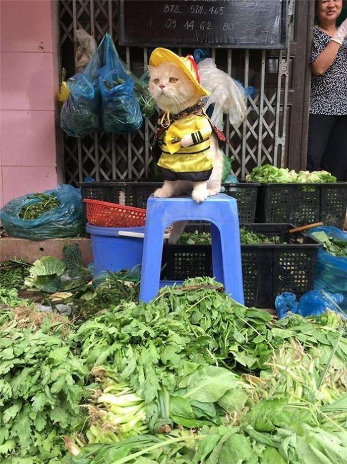 09 gatto travestito