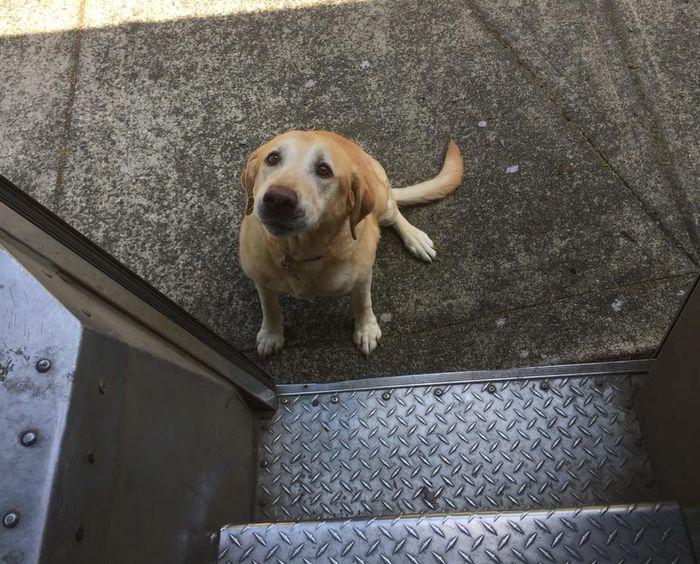 09 operazione UPS dog