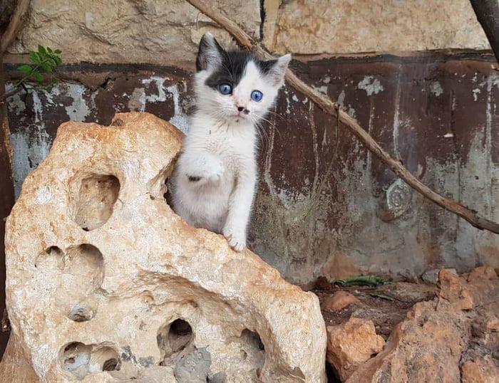 10 Da Aleppo una storia commovente tra un gattino e un cane