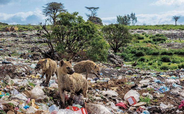 10 Inquinamento plastica National Geographic