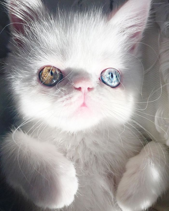 10 Pam Pam un gattino dallo sguardo davvero speciale