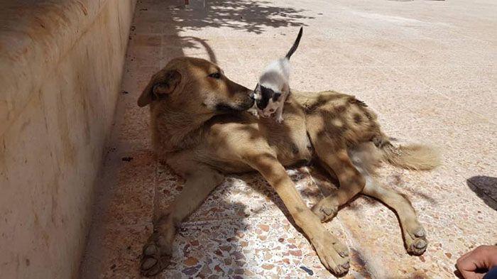 11 Da Aleppo una storia commovente tra un gattino e un cane