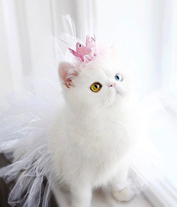 11 Pam Pam un gattino dallo sguardo davvero speciale