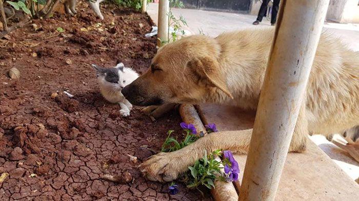 12 Da Aleppo una storia commovente tra un gattino e un cane