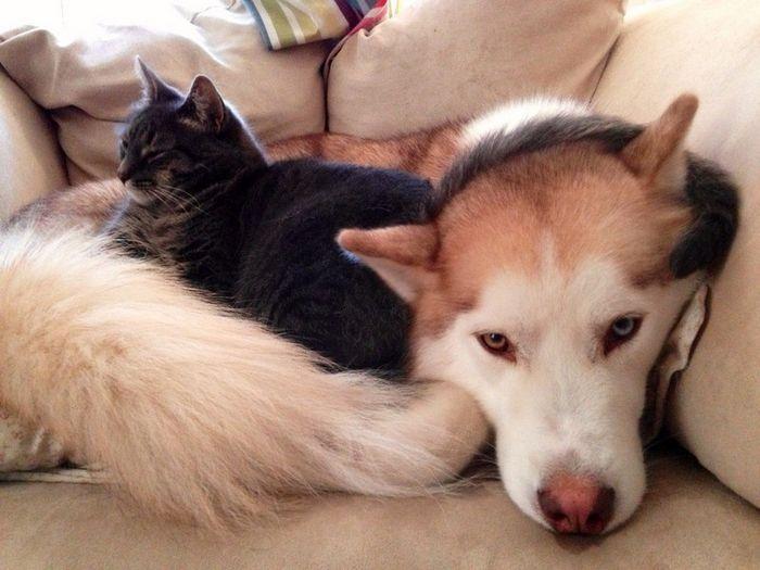 12 Gatti che dormono sui cani