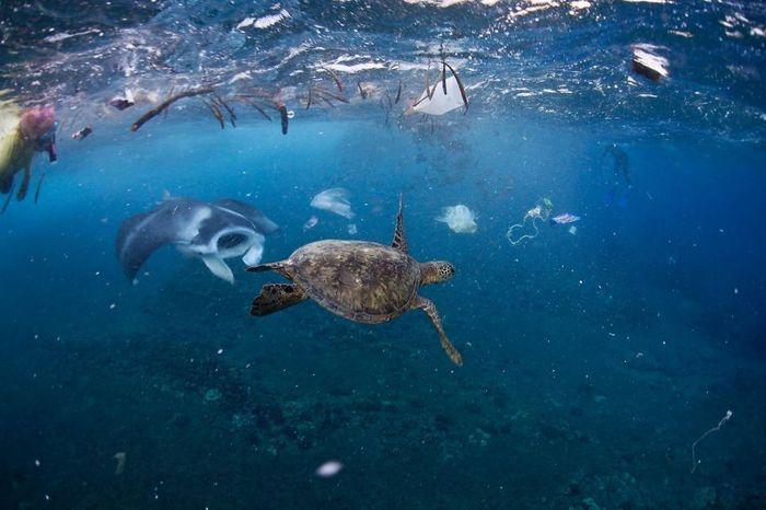12 Inquinamento plastica National Geographic