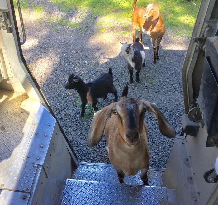 12 operazione UPS dog