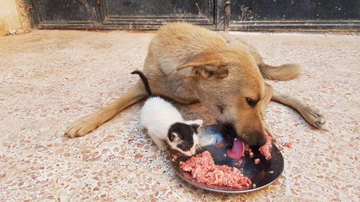 13 Da Aleppo una storia commovente tra un gattino e un cane